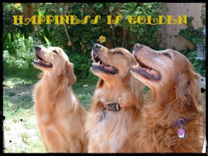 happiness-is-golden